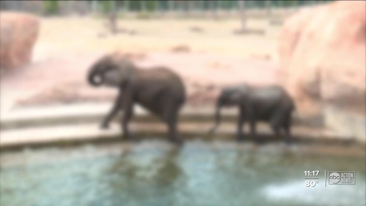 ZooTampa plans to vaccinate its mammals from COVID-19