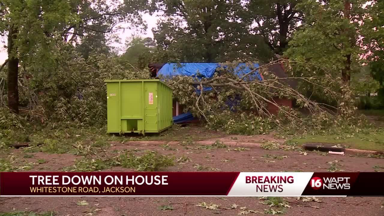 Downed Trees in north Jackson