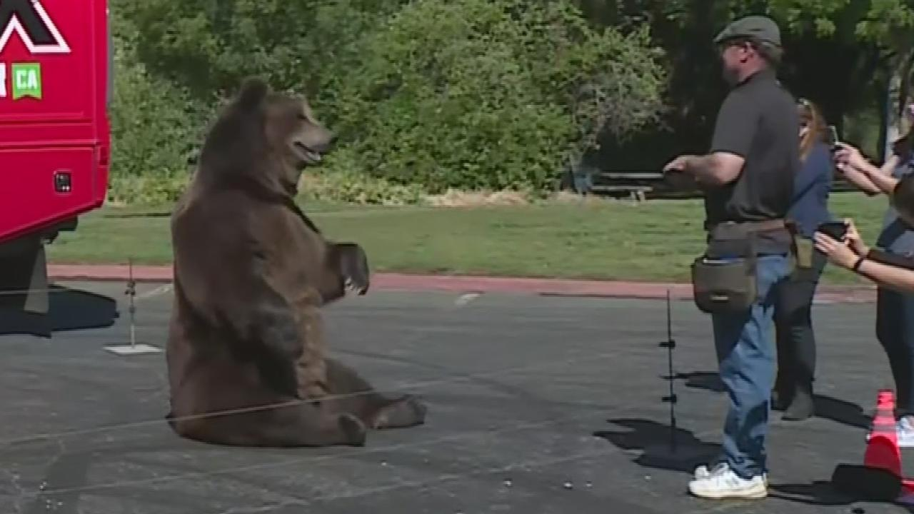 Cox Campaign's Bear Stunt Decried By Bear League