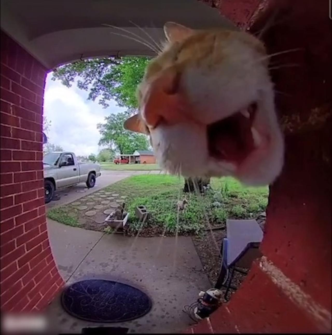 Cat Tries to Get Owner's Attention Through Doorbell Camera to Get Inside House