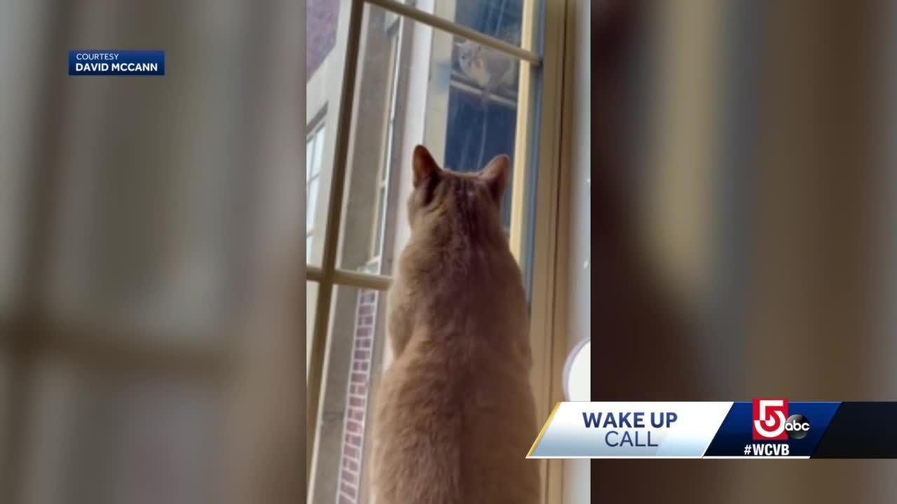 Wake Up Call from one persistent cat