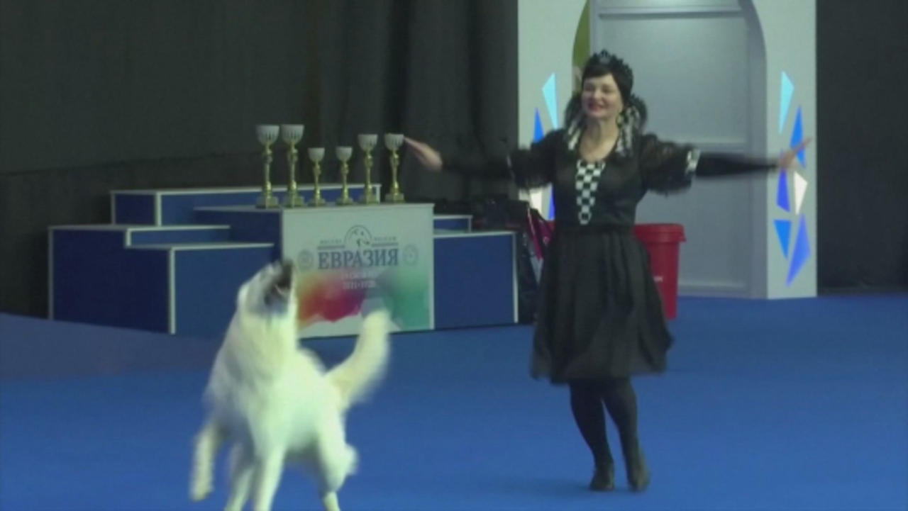 Dancing Dogs! Owners Along With Their Pets Compete in Russian Dancing Competition!