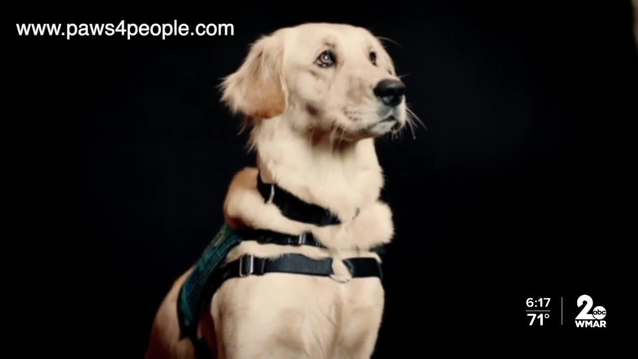 Service dogs save veterans lives through paws4vets