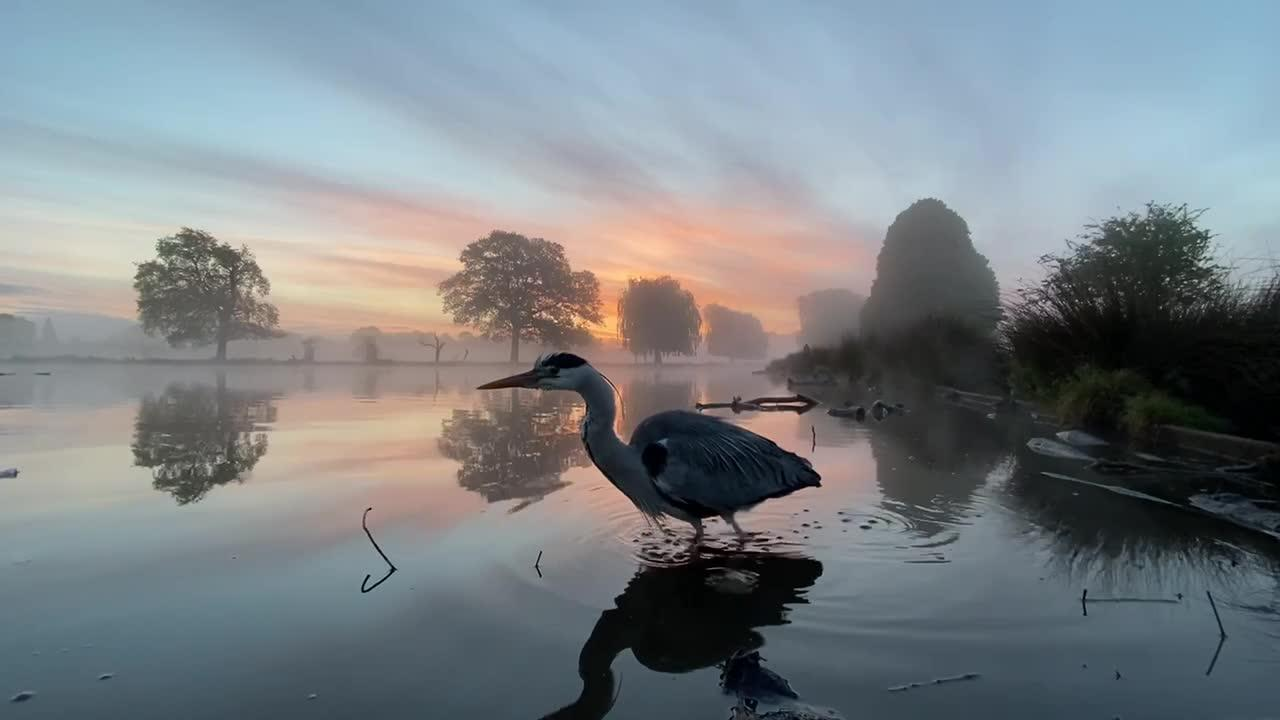 This calming clip of a heron at sunrise in London is pure food for the soul