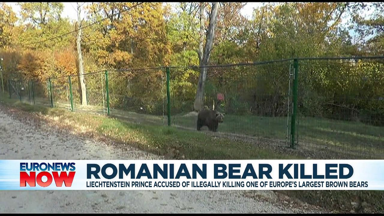 Prince probed over claims he killed Romania's largest bear