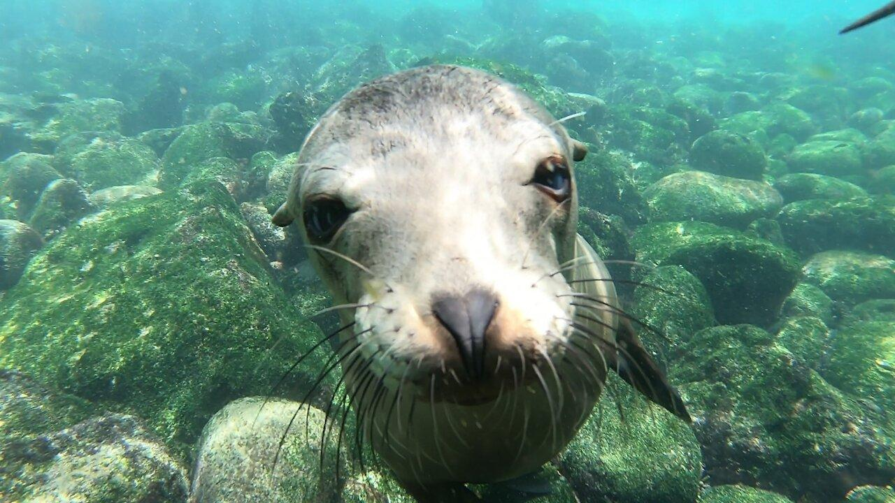 Baby sea lions are the happiest creatures in the ocean