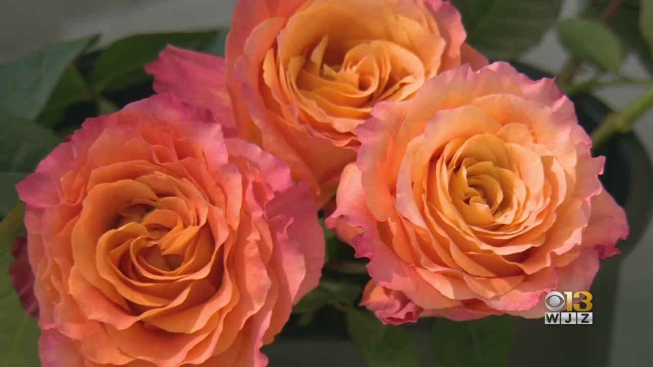 Flower Prices Up 20% Ahead Of Mother's Day Due To Shortage Caused By Pandemic