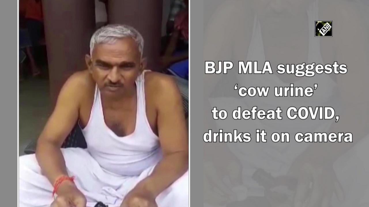 BJP MLA suggests 'cow urine' to defeat COVID, drinks it on camera
