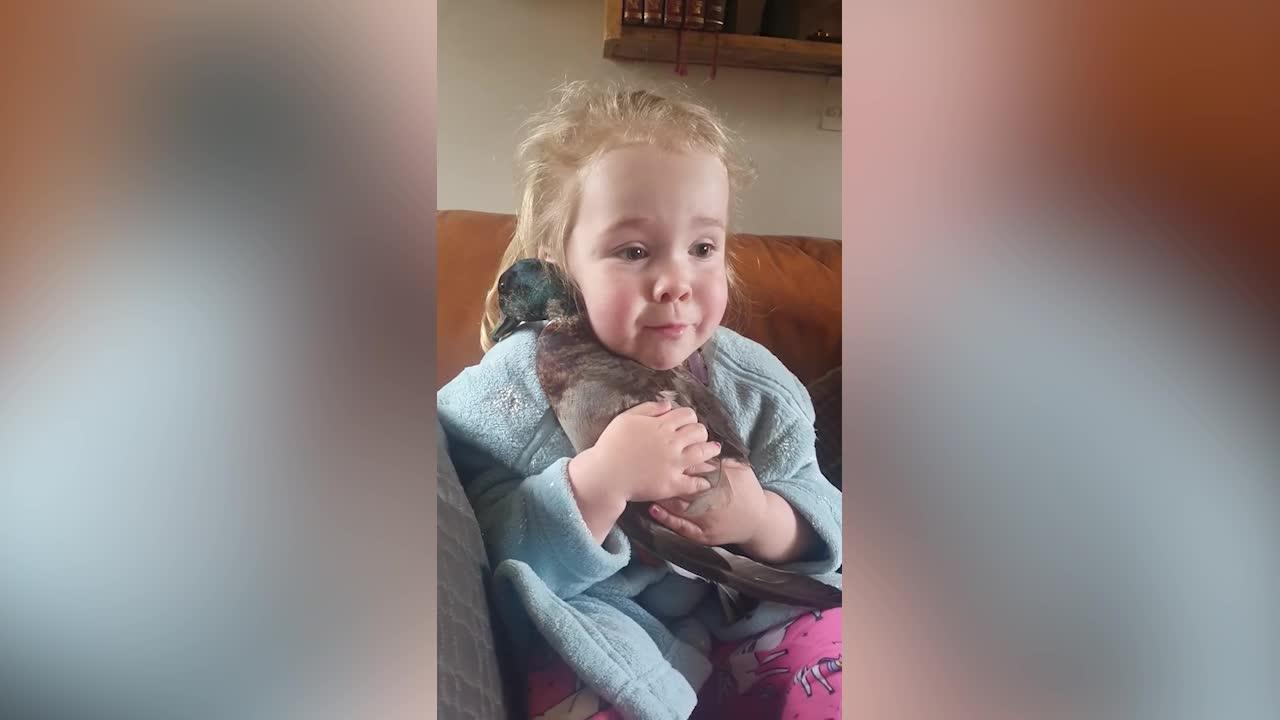 This adorable footage of a young girl cuddling her pet DUCK will absolutely melt your heart!