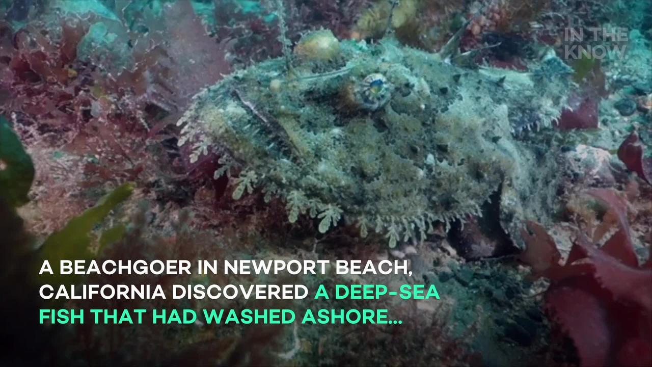 Beachgoer stumbles upon deep-sea fish that somehow washed ashore