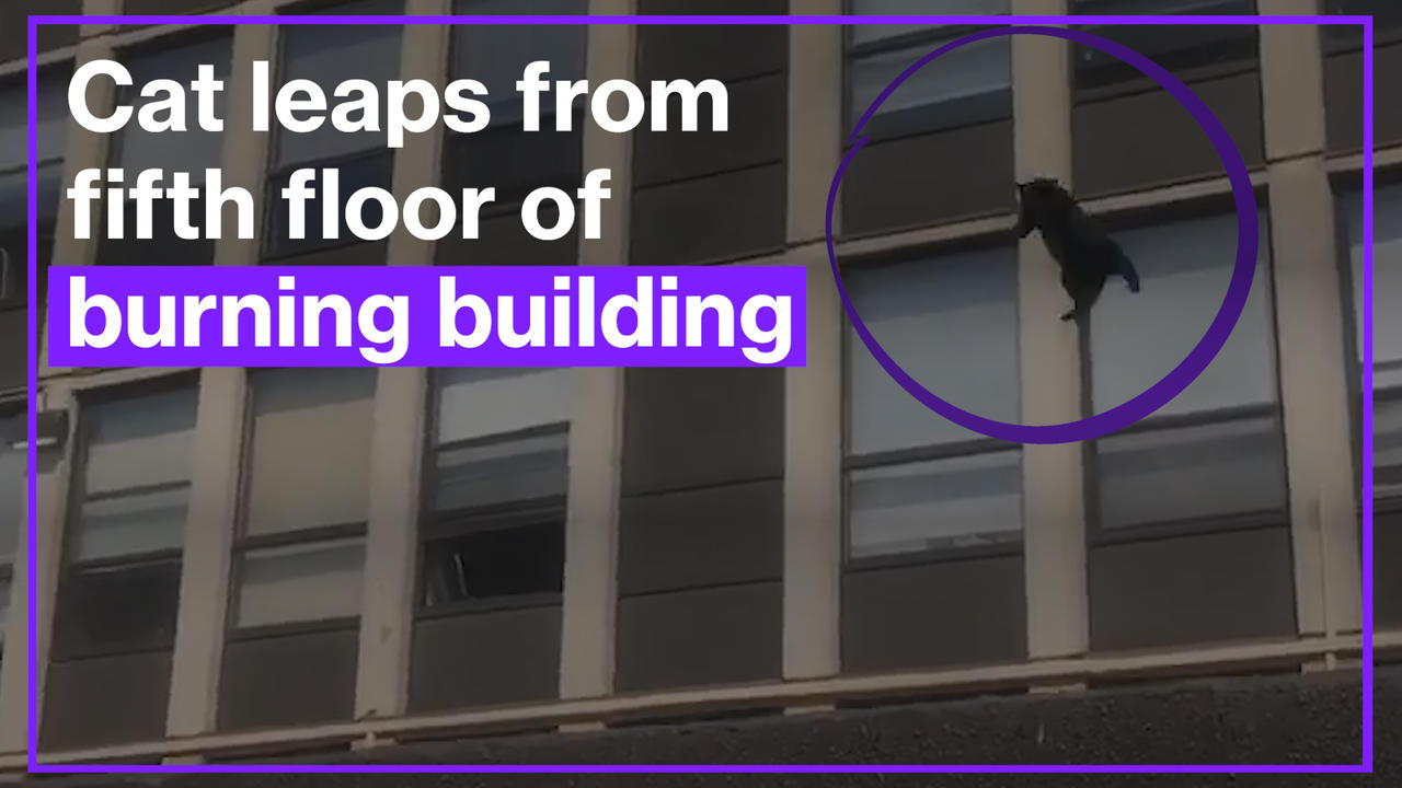 Cat leaps from fifth floor of burning building, bounces once and runs off