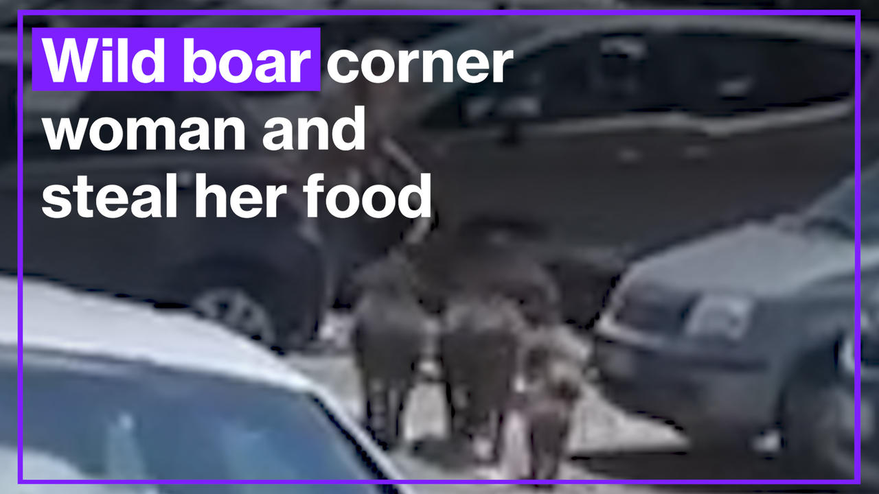 Wild boar corner Italian woman and steal her food shopping