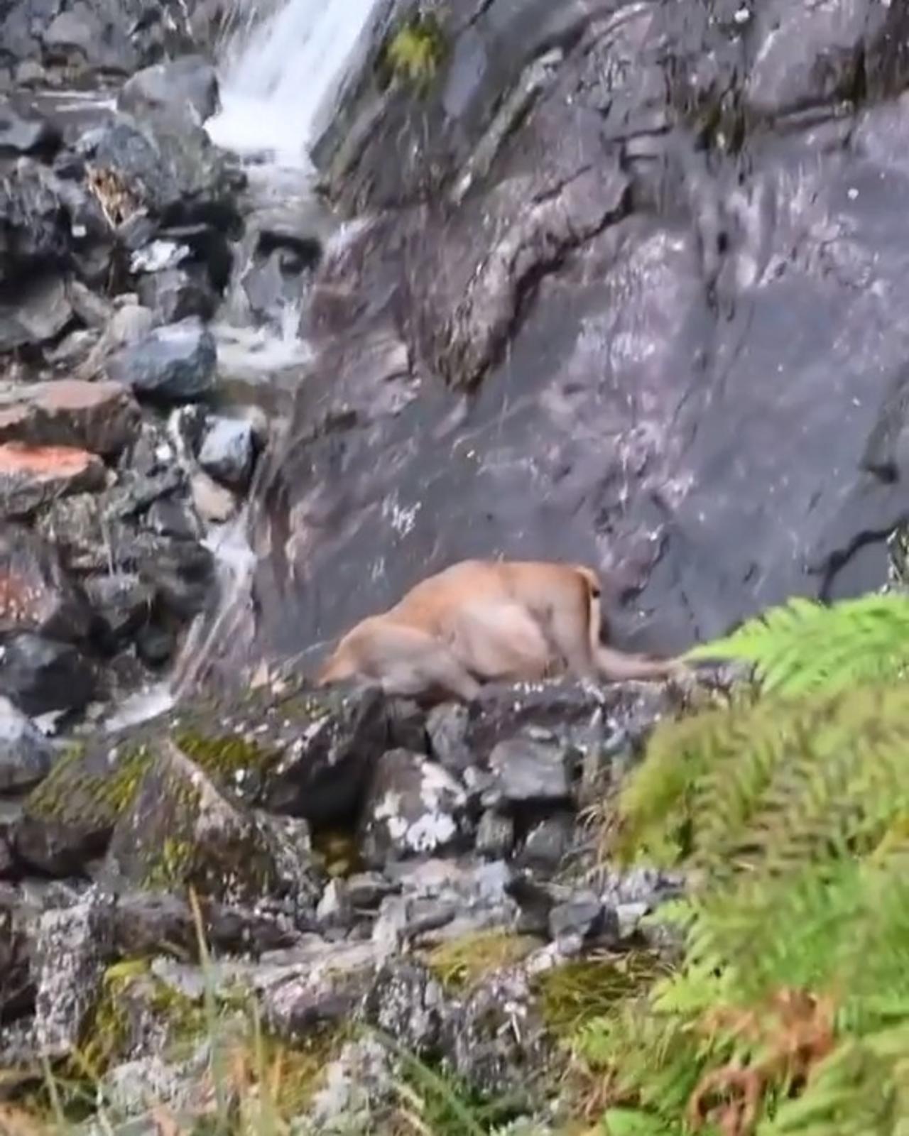 Deer Dies After Slipping And Falling Off Waterfall