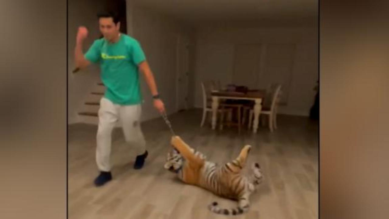 New video of man and missing Houston tiger playing before disappearance