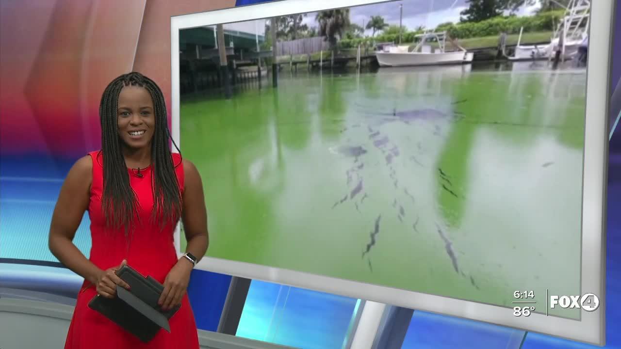 Algae effects environment, health and economy