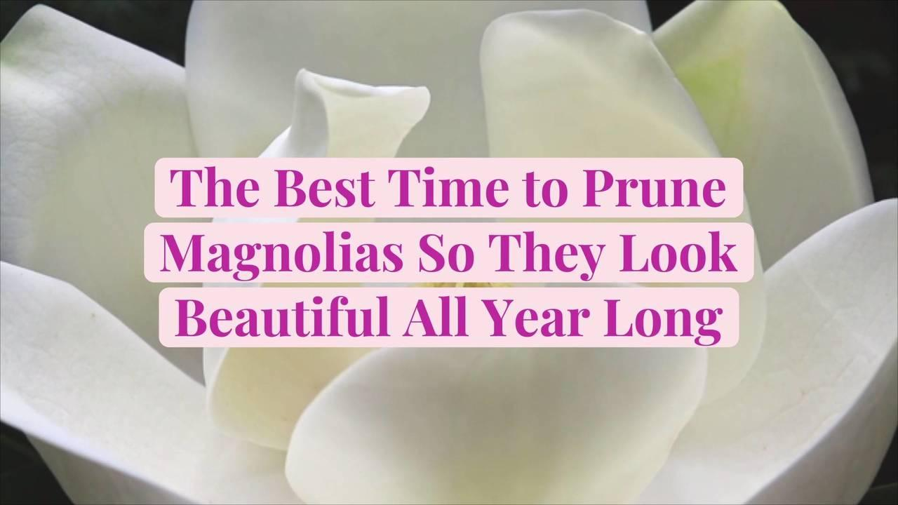 The Best Time to Prune Magnolias So They Look Beautiful All Year Long