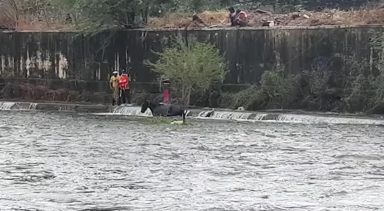 Horse finally rescued after spending whole night stuck in overflowing river