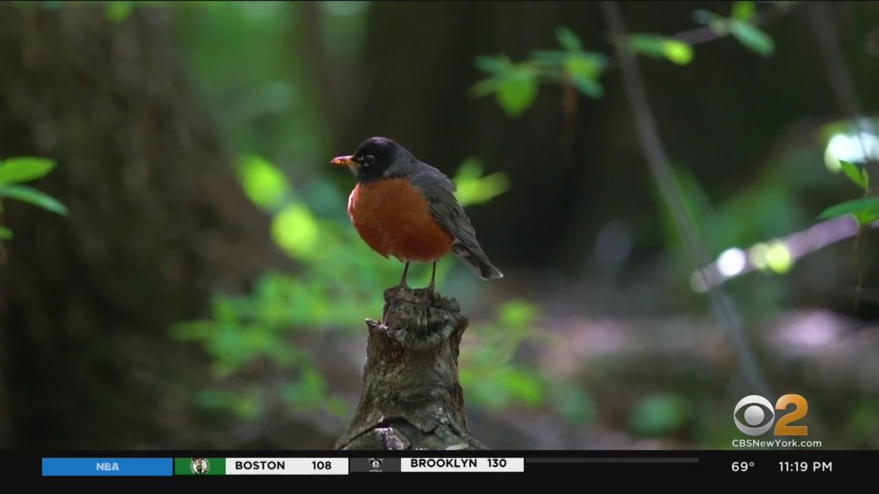 Snapshot NY: Central Park An International Destination For Birds, And Bird Watchers