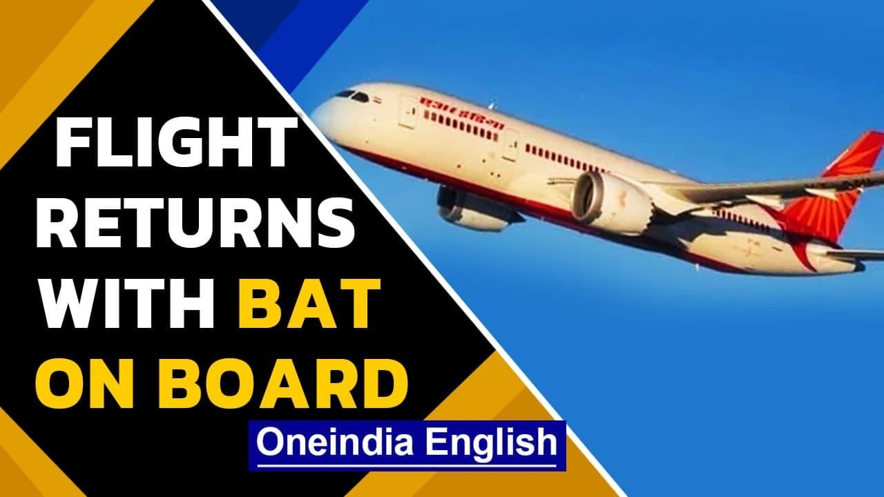 Air India flight returns midway after bat is found on board | Oneindia News