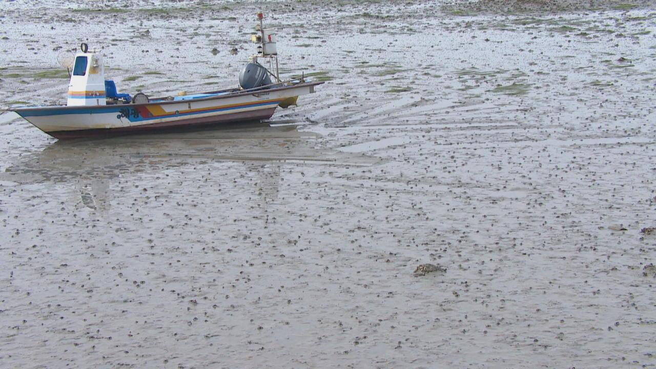 S Korea mudflats: Racing for UNESCO world heritage recognition