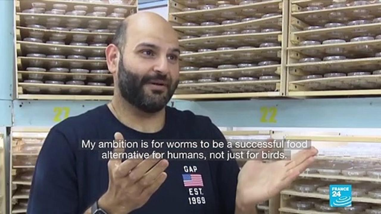 Kuwaiti breeder hopes superworms will become new superfood