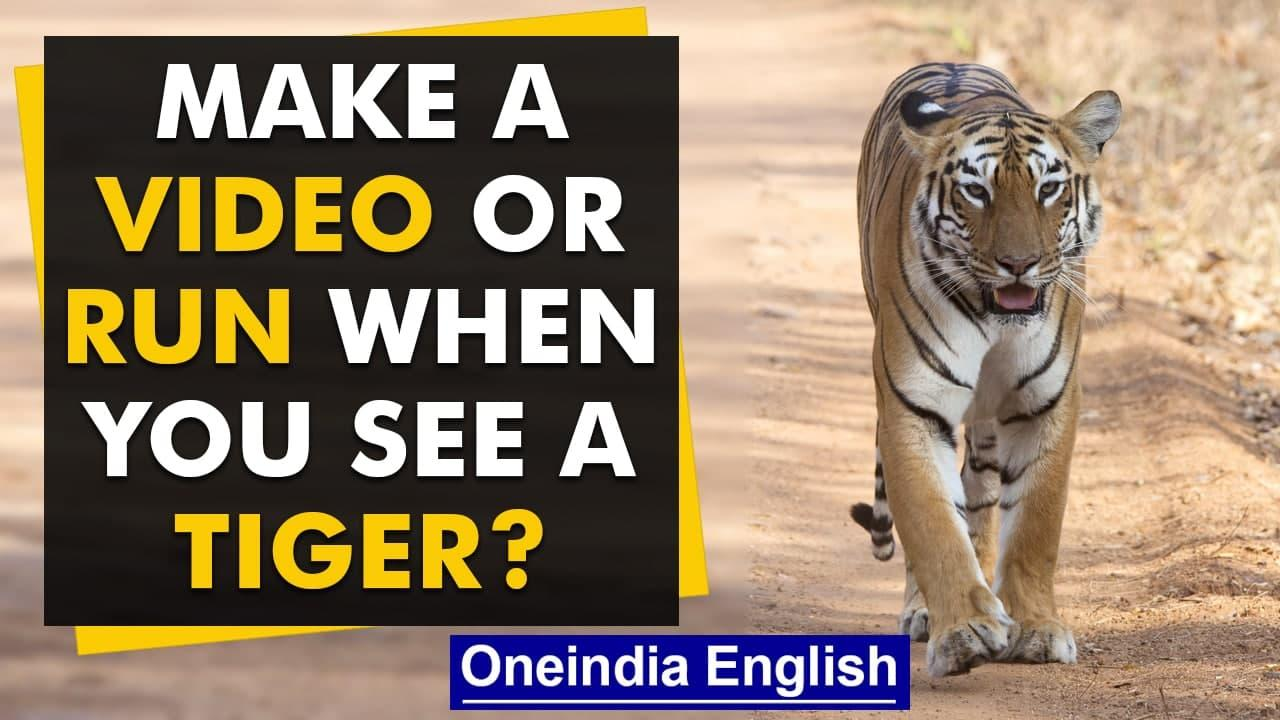 Bikers spot tigers in Maharashtra; record video instead of fleeing   Watch   Oneindia News