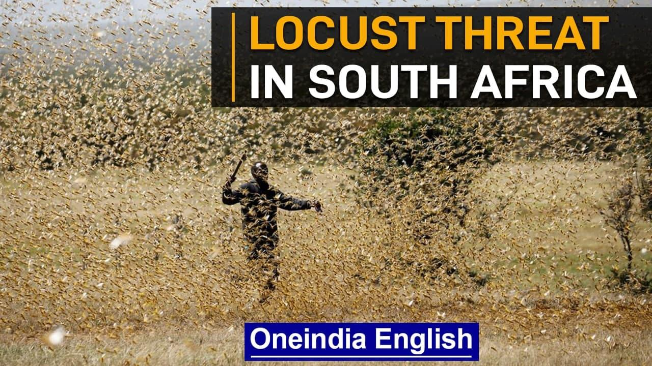 South Africa: Locusts swarms threaten farm production | Oneindia News