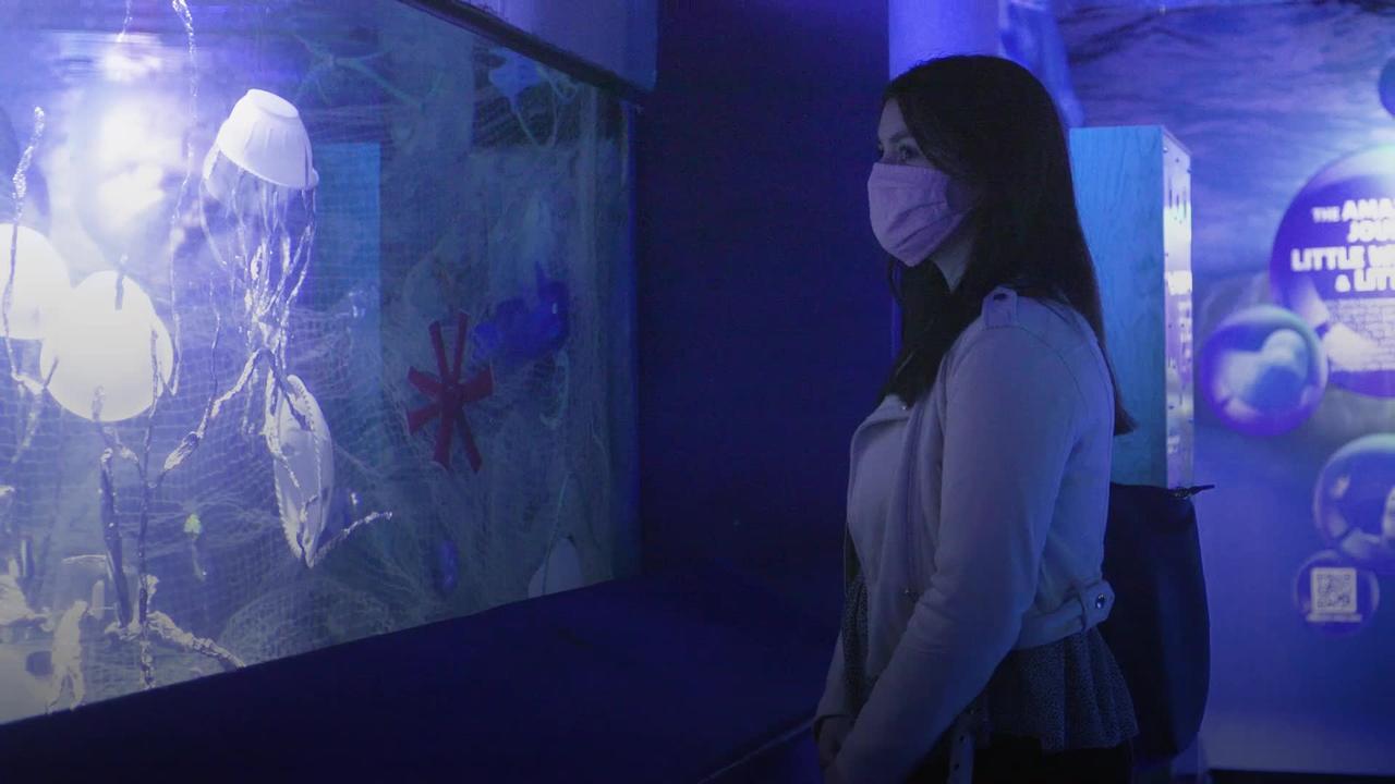 London aquarium creates ocean plastic exhibit to mark World Oceans Day