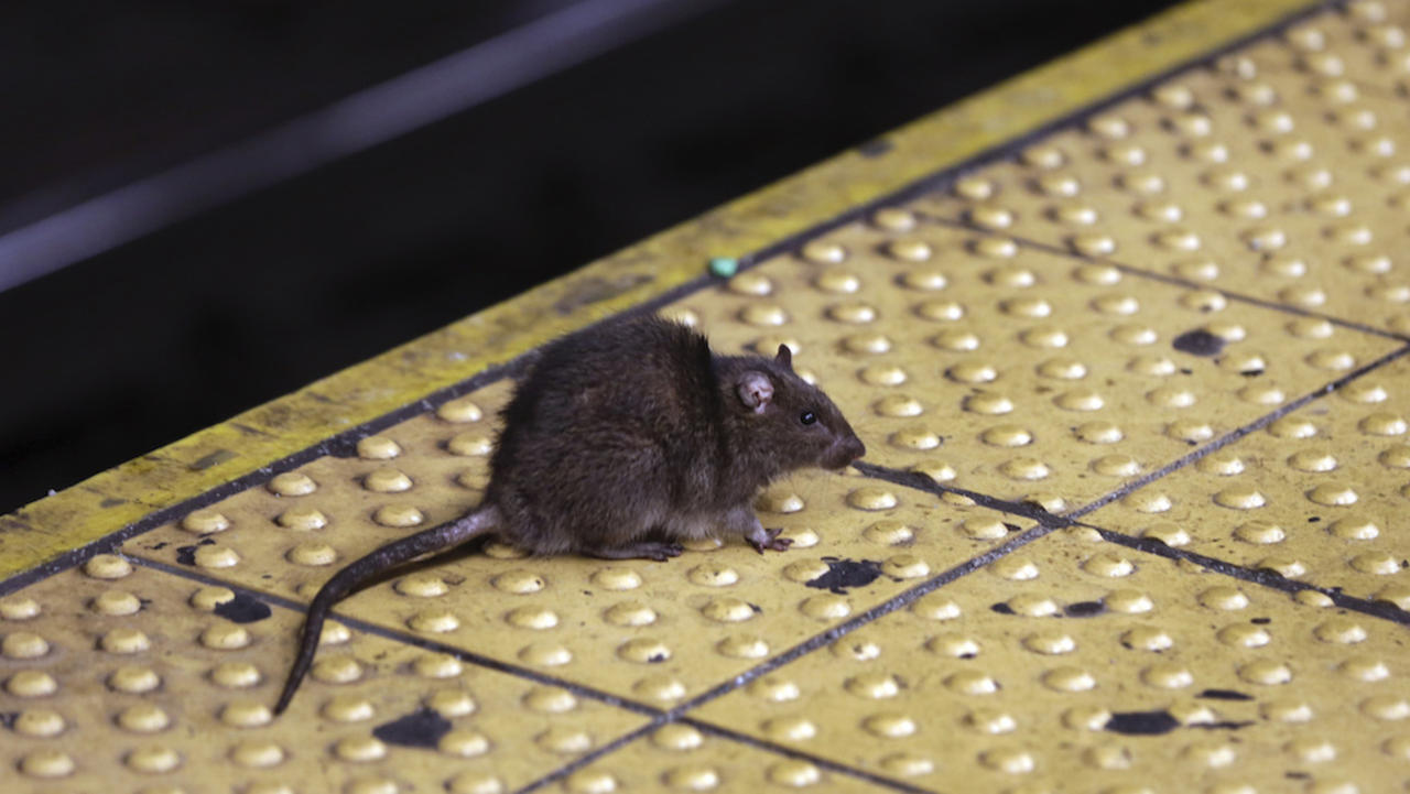 First confirmed human case of Sin Nombre hantavirus reported in Michigan