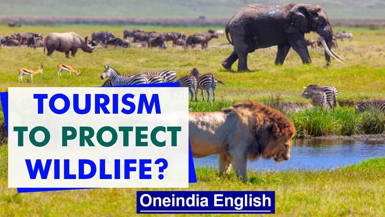 Tanzania's Serengeti National Park: How humankind co-exists with wildlife   Oneindia News
