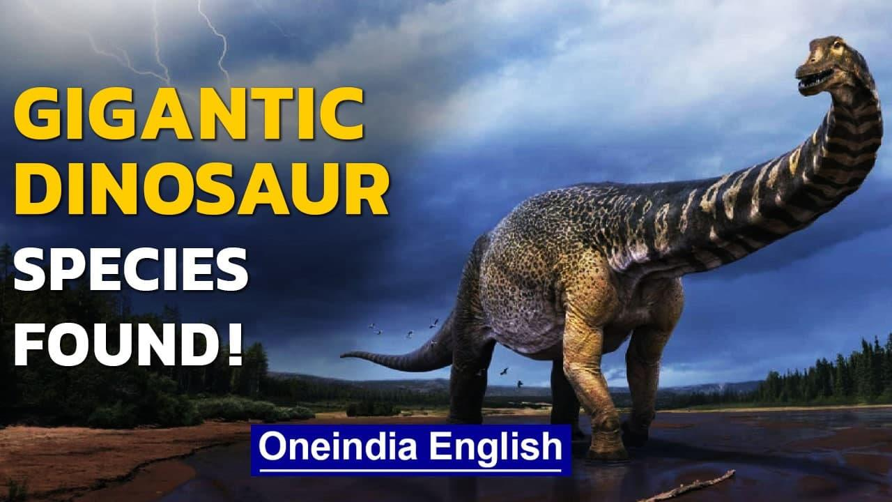 Australia: New dinosaur species 'Cooper' discovered; One of the largest in the world | Oneindia News