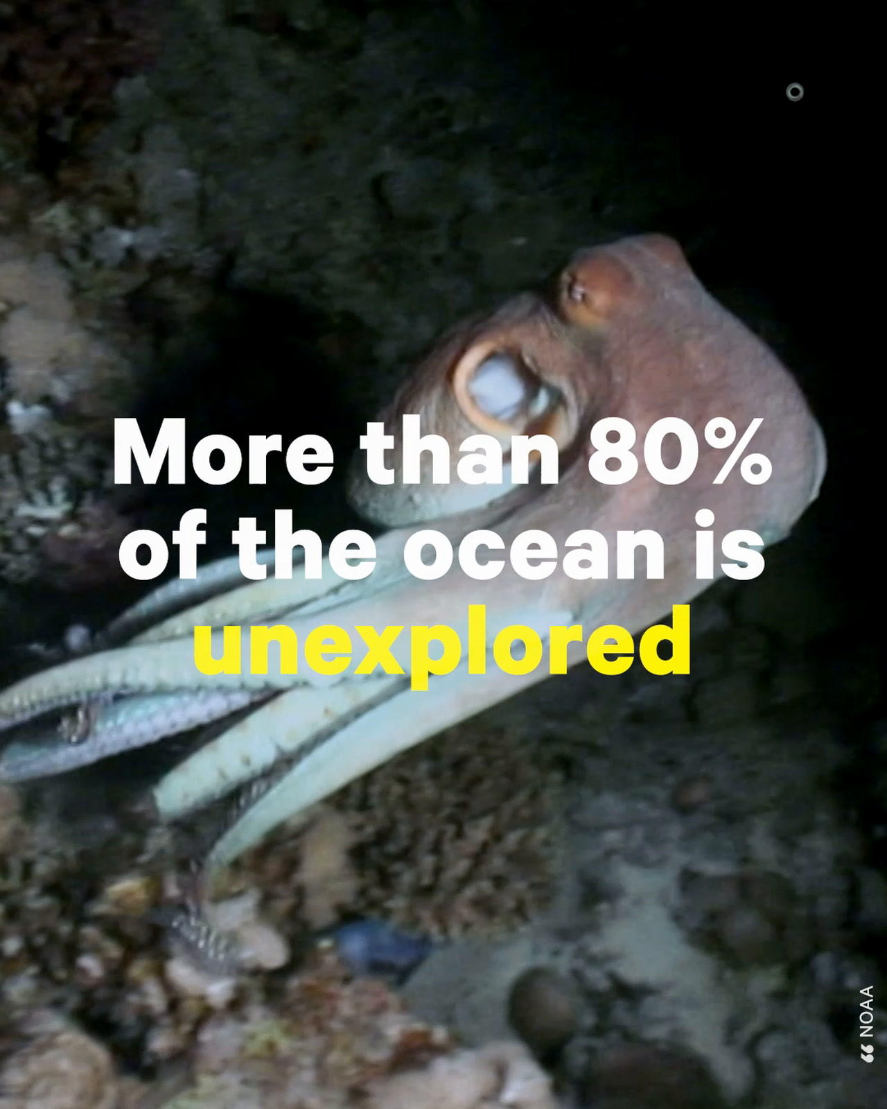 Activist Fights to Stop Deep Seabed Mining