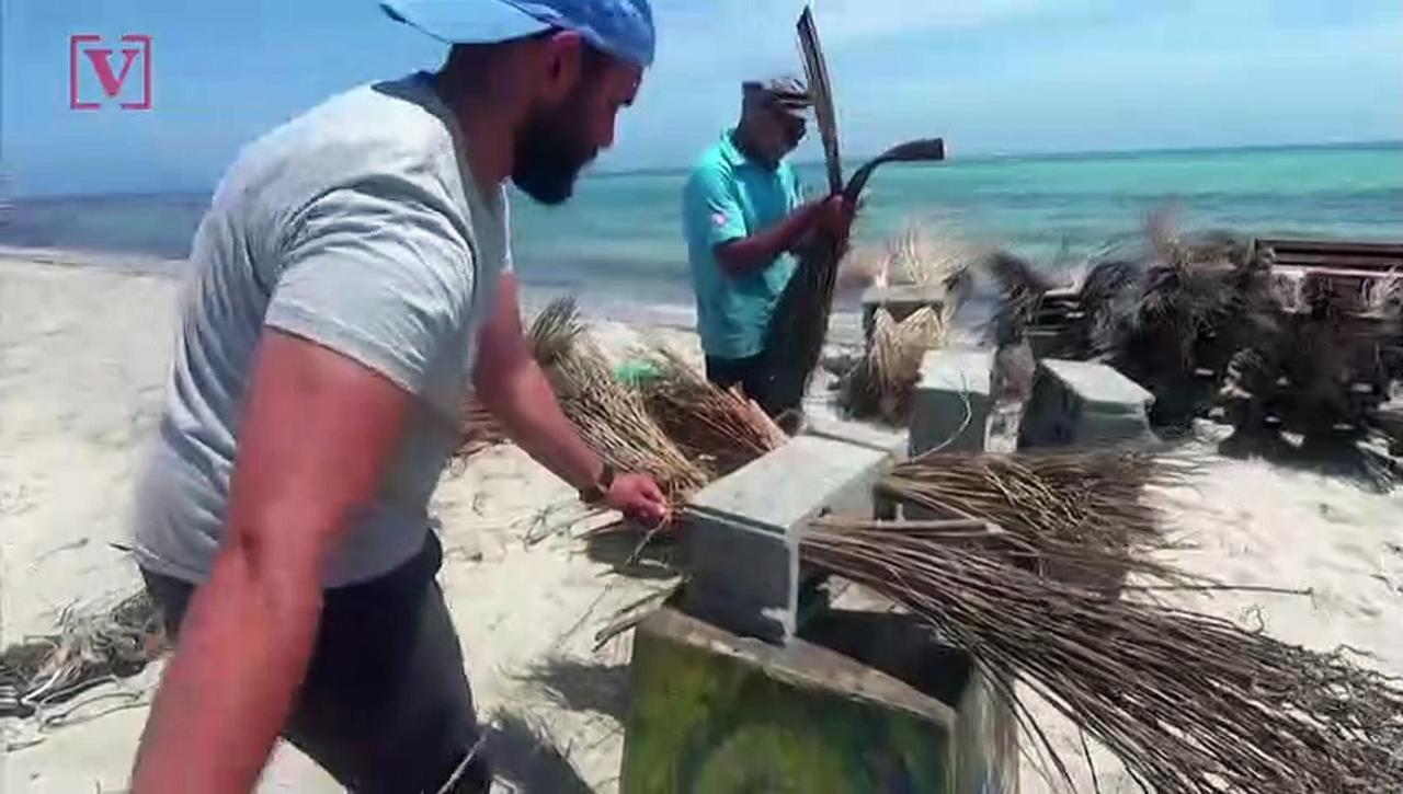 Activists Use Palm Branches and Concrete to Make Reefs for Tunisia's Polluted Seas