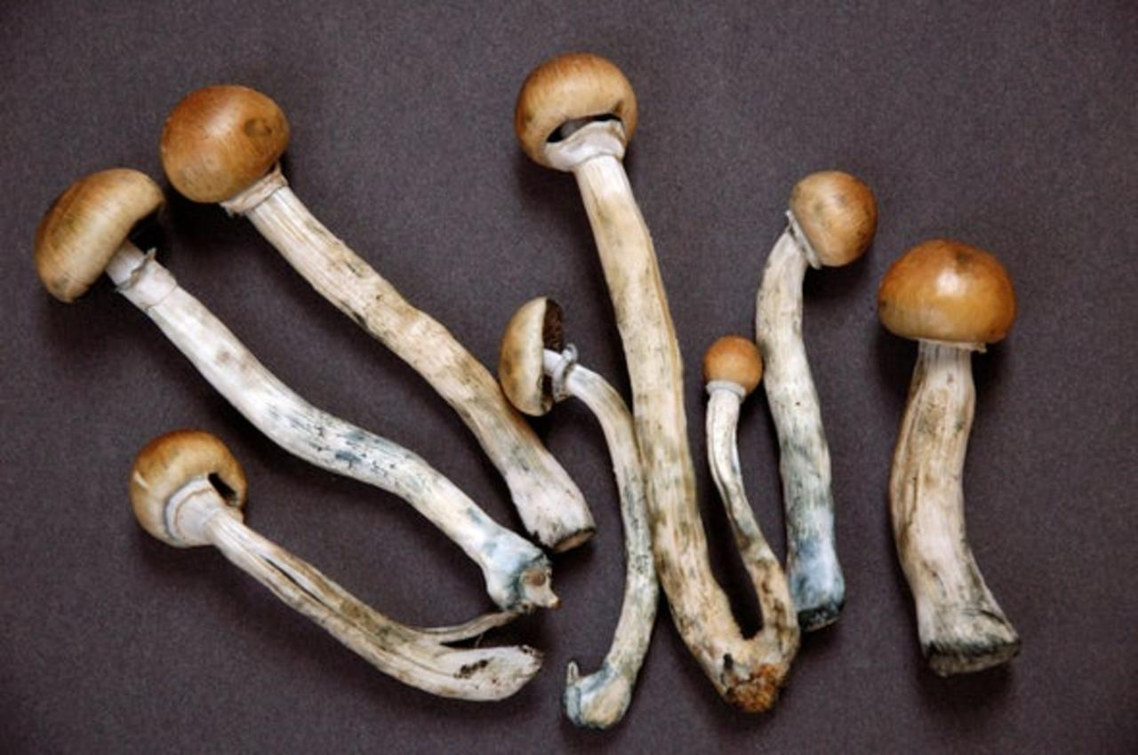 New Study Suggests Psilocybin May Be as Effective as Leading Antidepressants
