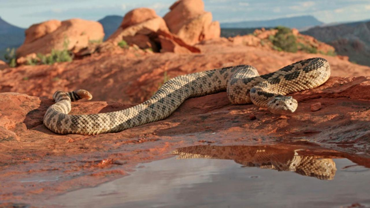 Utahns warned of rattlesnakes