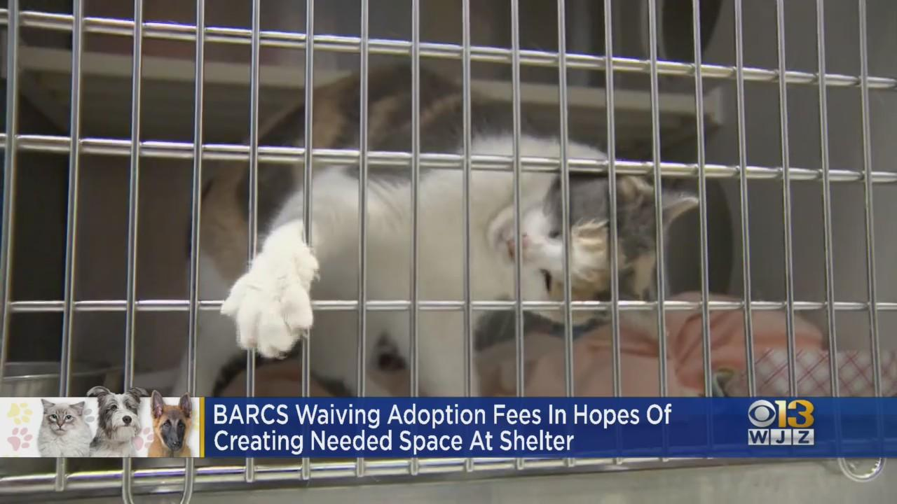 BARCS Is Out Of Space; Adoption Fees Waived Through June 13