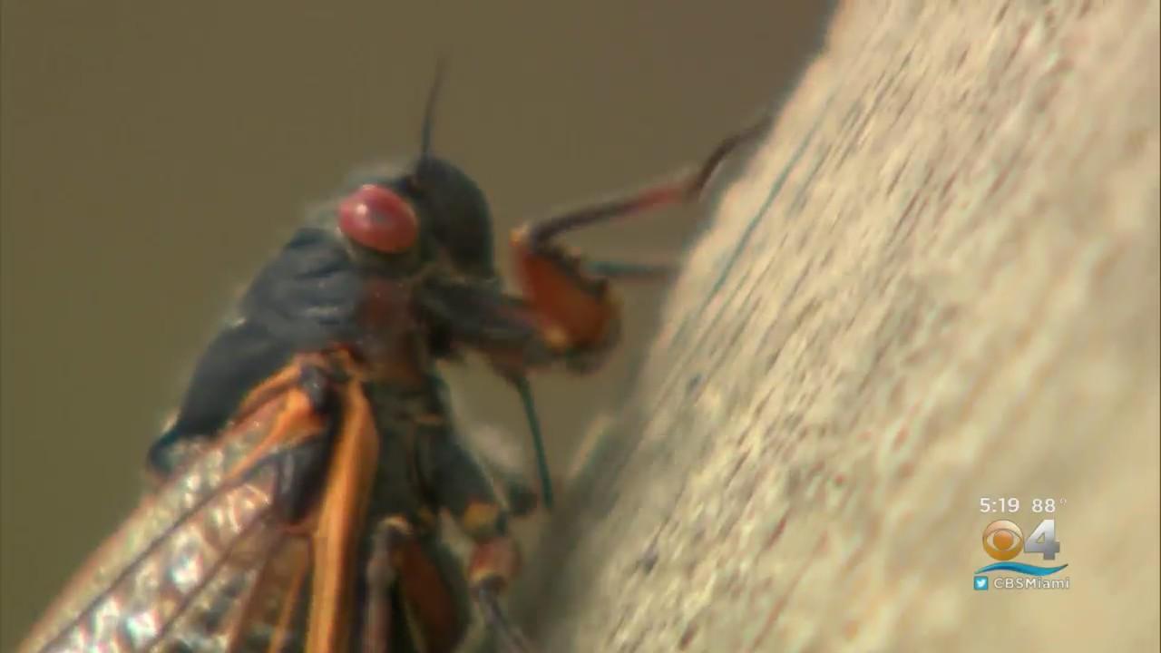 Cicadas Have Returned