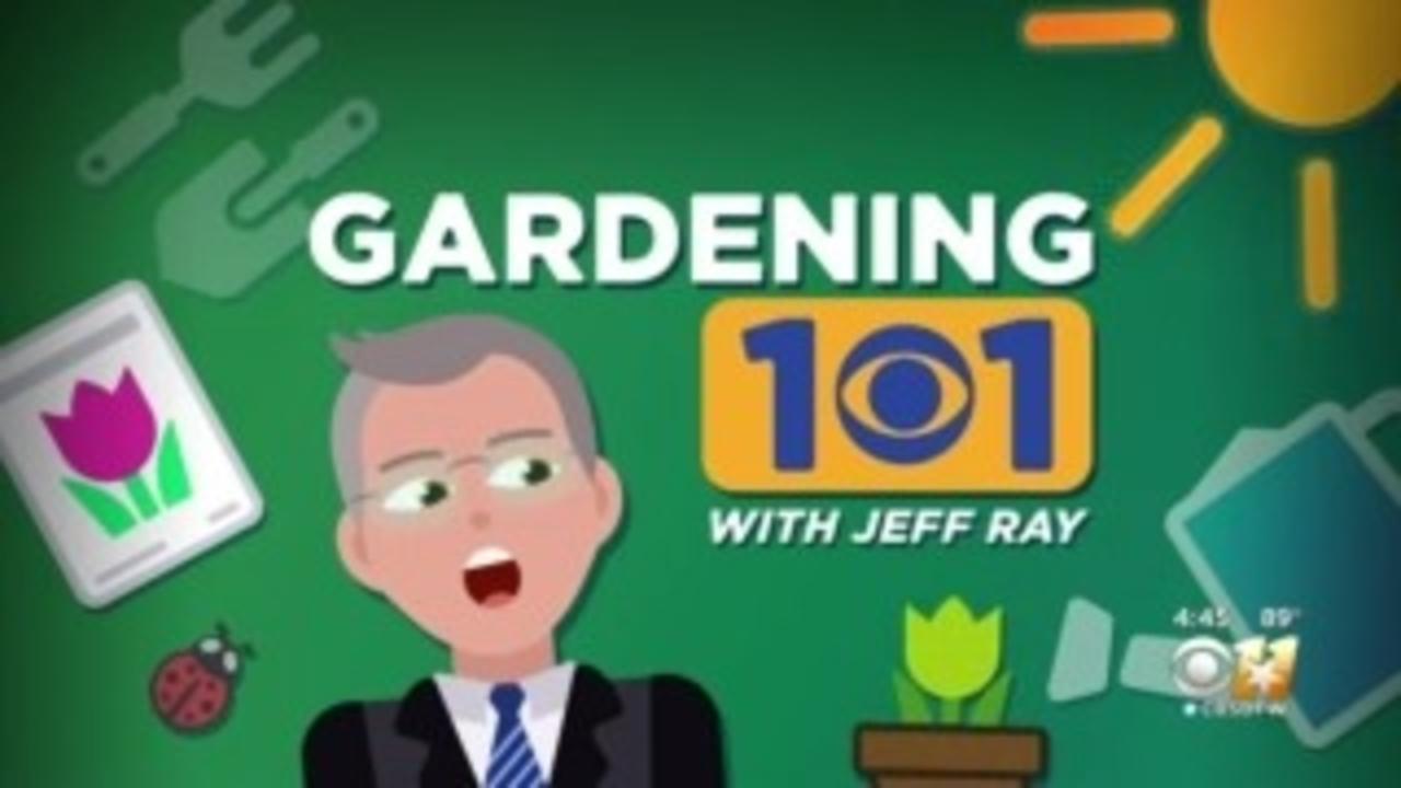 Gardening 101: Shade Gardens