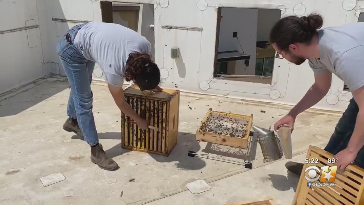 Fort Worth's Tanger Outlets Launches Honey Bee Environmental Project