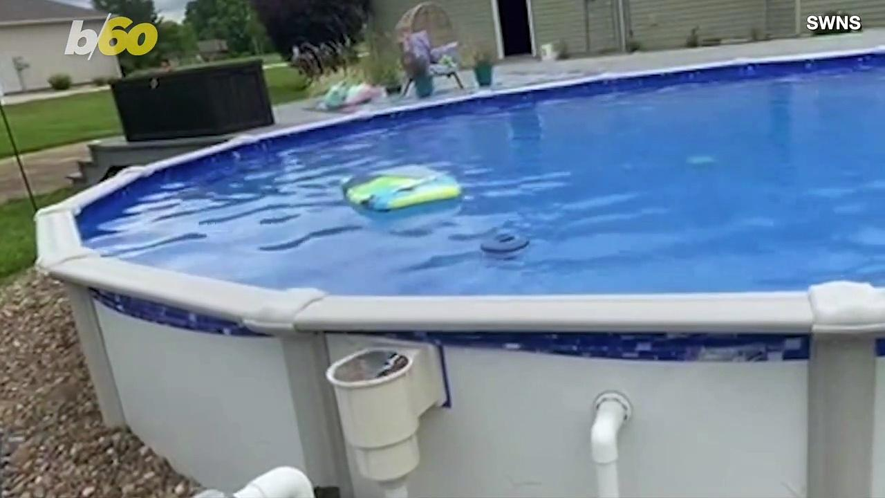 This Pup Has a Genius Way to Get Into and Out of the Pool