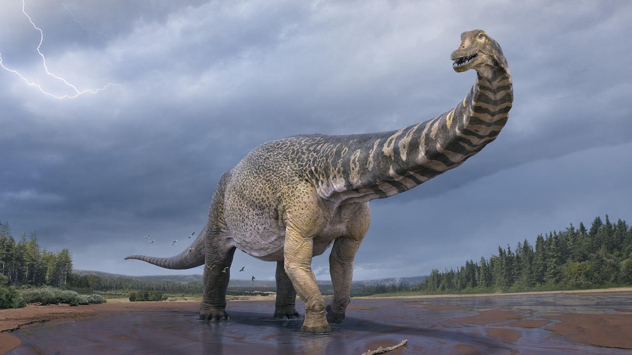 New Dinosaur Species Discovered In Australia Is One Of World's Biggest
