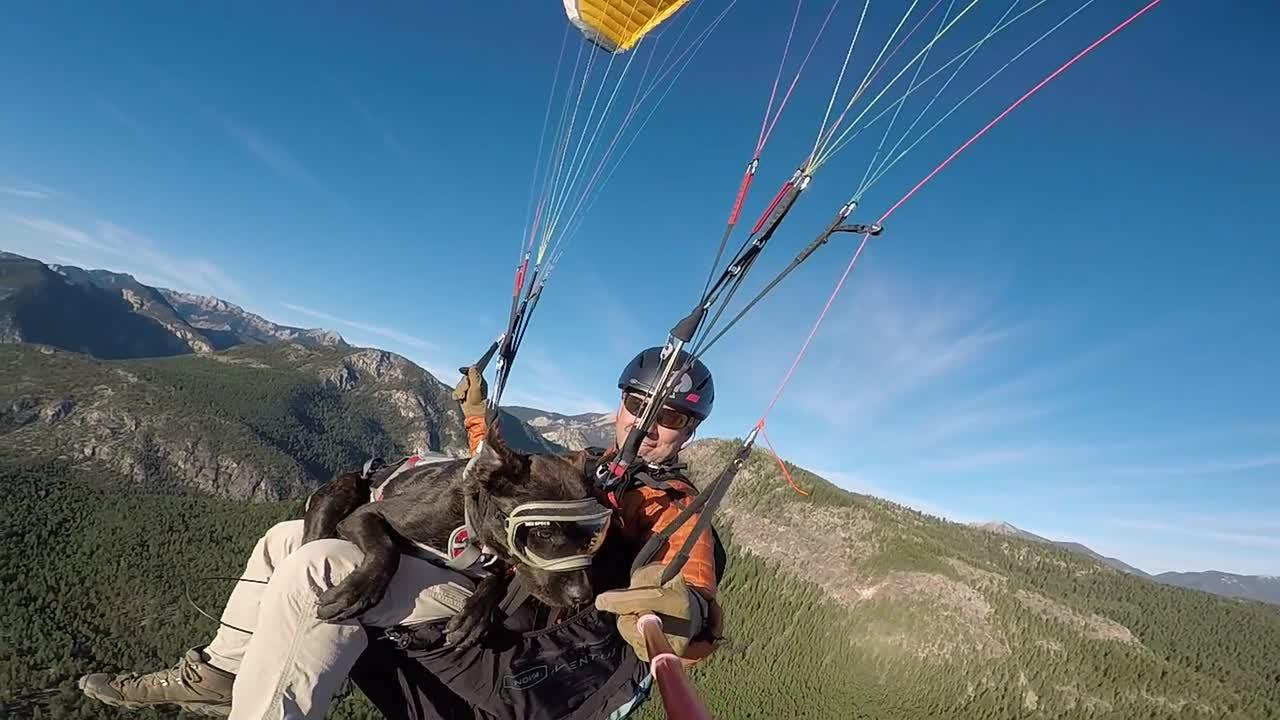 Dog appears unbothered as he paraglides over Canadian mountains with owner
