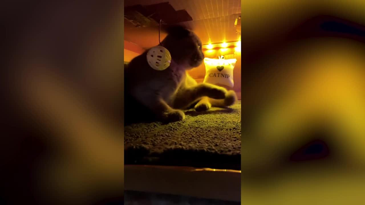 Party-loving cat has its own mini nightclub