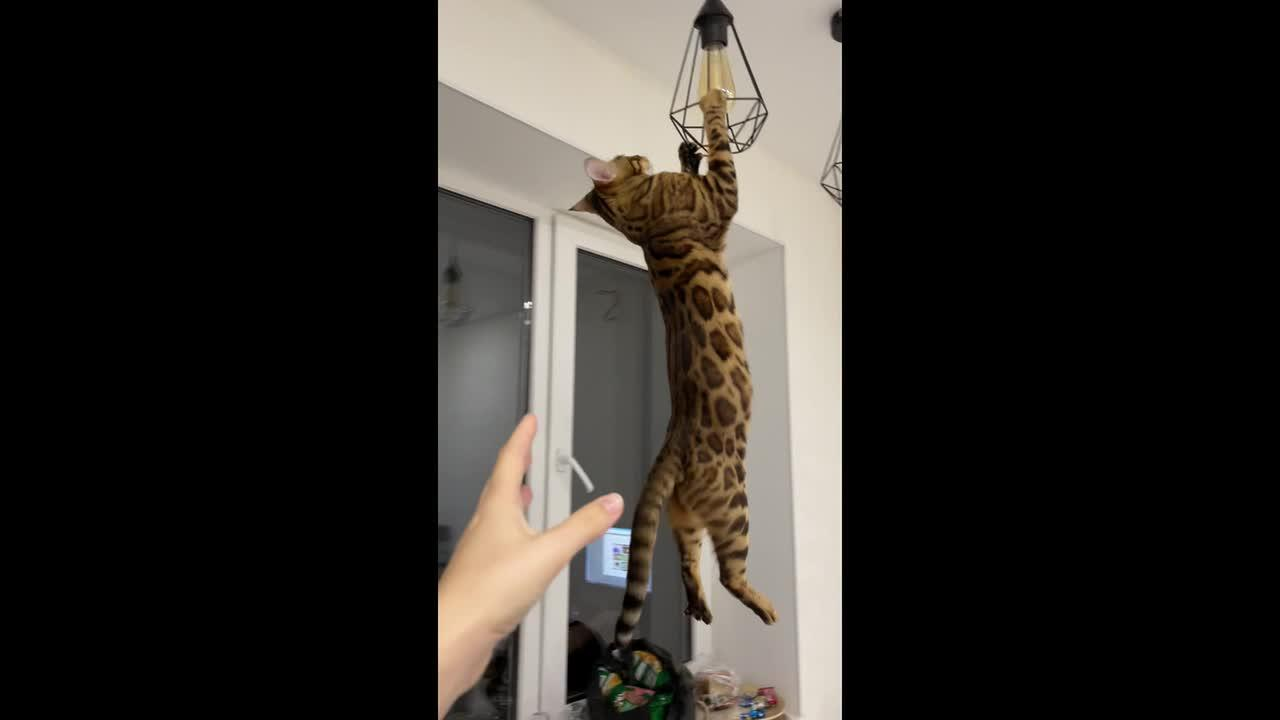 These funny pets from Russia do the CRAZIEST things
