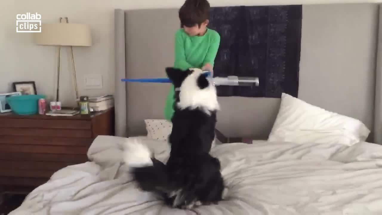 Paw Wars: Boy and border collie battle it out with lightsabers in Toronto