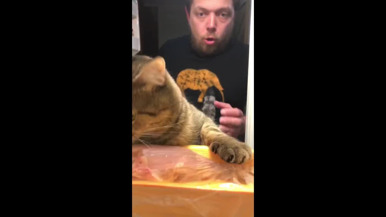 This Russian man's cat loves raiding his fridge for food
