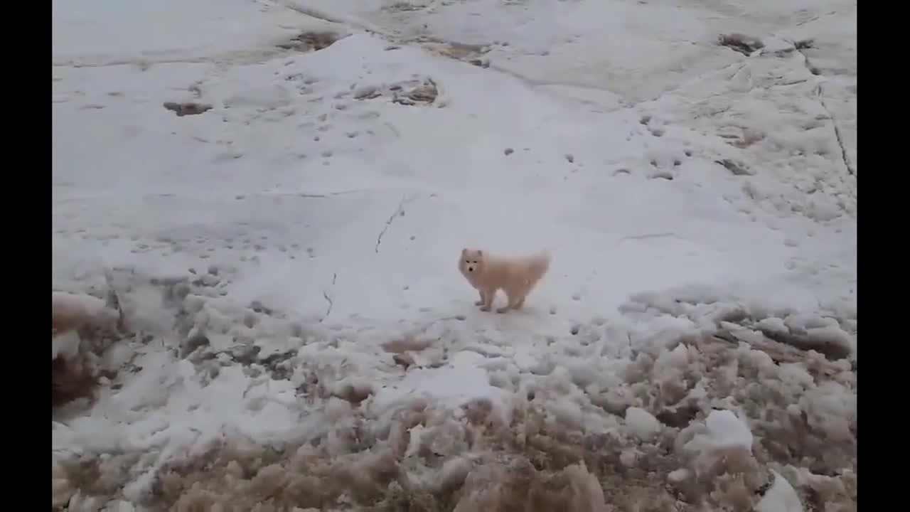 Touching moment Russian sailors rescue stranded dog from Arctic ice