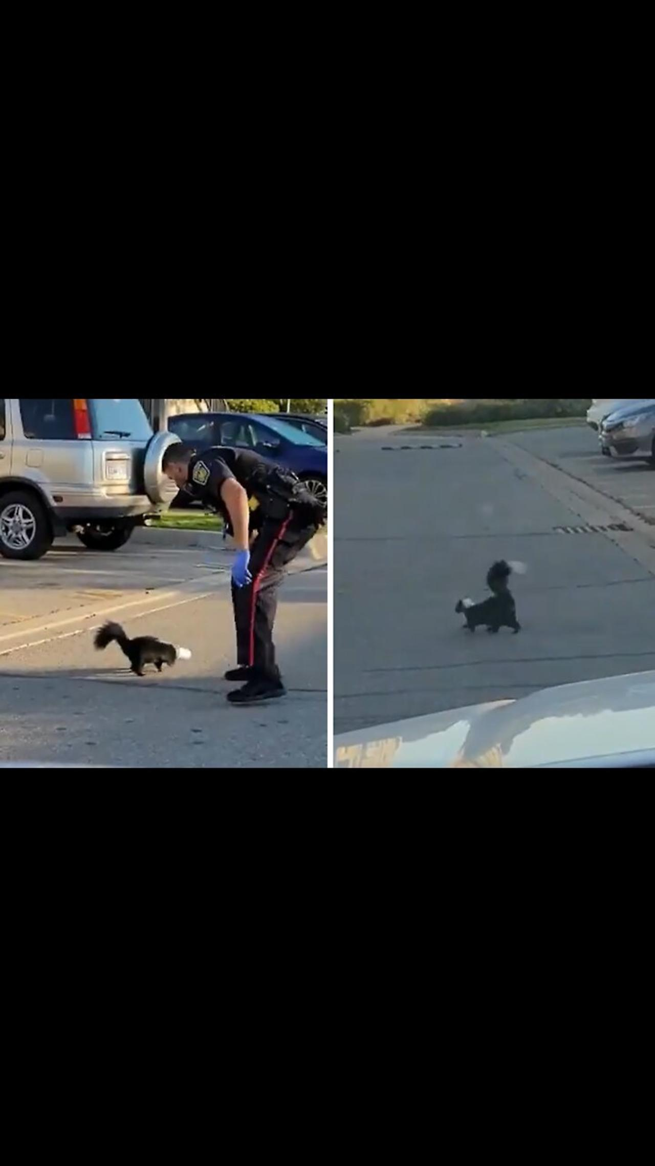Police officer rescues skunk with cup stuck on its head
