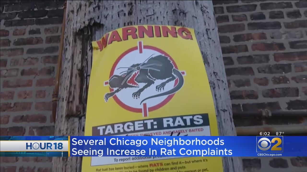 West Town Tops List For Rat Complaints In Chicago