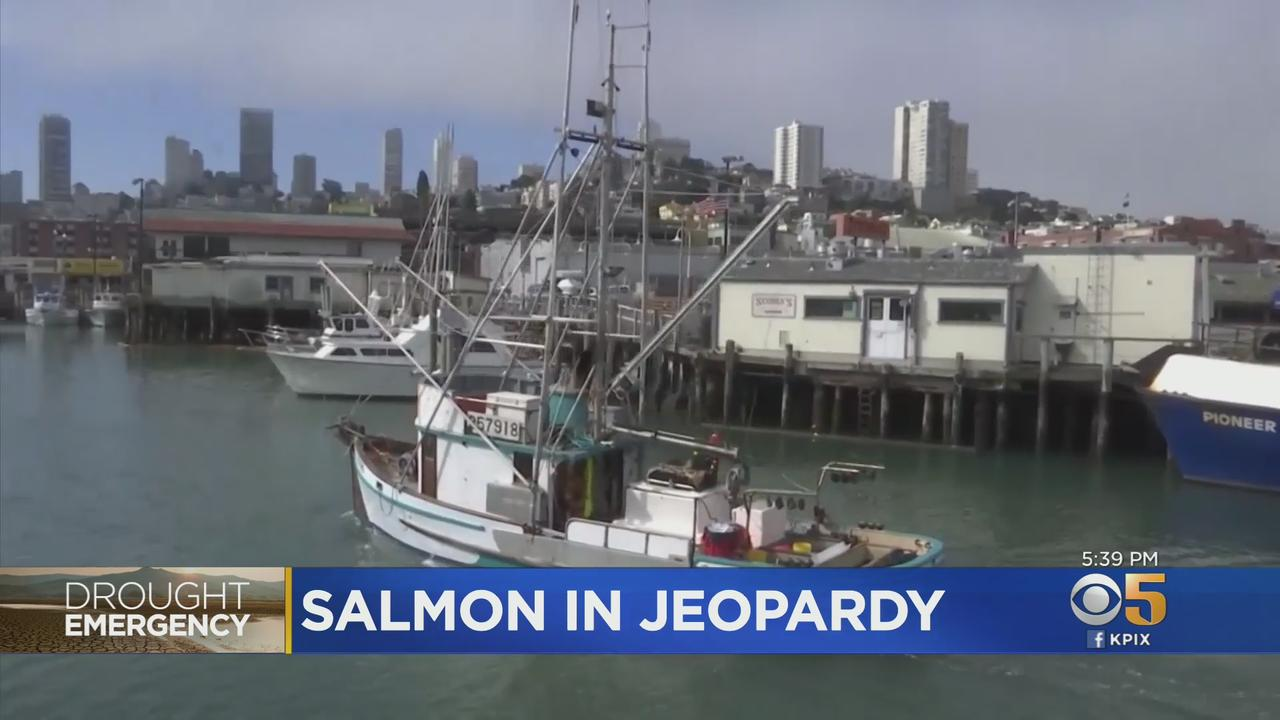 California Drought Emergency: Fish & Wildlife Launch Operation To Save Chinook Salmon